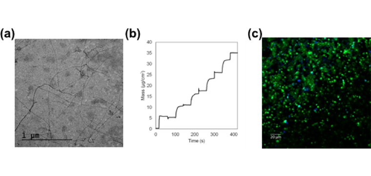 (a) Negative Staining TEM imaging of self-assembling peptide nanofibers. (b) QCM data showing mass buildup of a RADA16 LbL film. (c) Platelets (green) immunostained for activation marker P-selectin (blue) and coated on collagen.