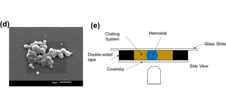 (d) PEG-b-PLGA nanoparticles imaged via scanning electron microscopy. (e) Schematic of in vitro clot imaging assay.