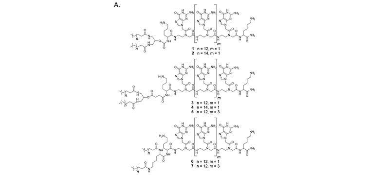 (A)  Chemical structures of PNA amphiphiles.