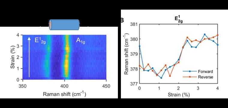 (A) Intensity map of Raman spectra of MoS2/PMMA scroll fiber under uniaxial strain. (B) Peak wavenumber of Raman  E∧1∨2g modes.